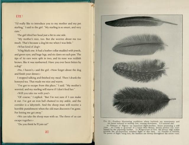 Σελίδες από το βιβλίο