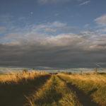 Χορταριασμένος δρόμος