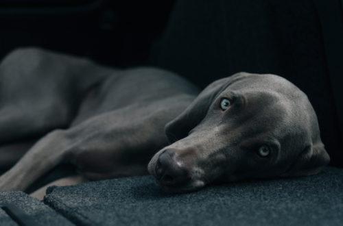 μαύρος σκύλος