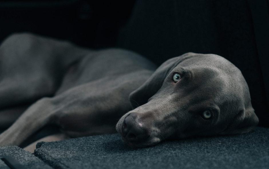 Η αθανασία των σκύλων του Κώστα Μαυρουδή