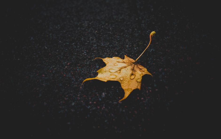 Φθινόπωρο της Άλι Σμιθ